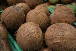 coconuts、写真、ミャンマー、トラベル・インフォメーション、モーラミャイン