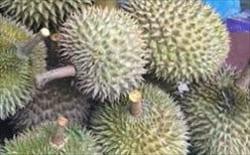 ドリアン、dorian、モーラミャイン・トラベル・インフォメーション、果物