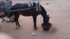 ミャンマー バガン 馬車 写真