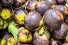 ダウェイ パルム酒 Dawei Wine Palm Fruit